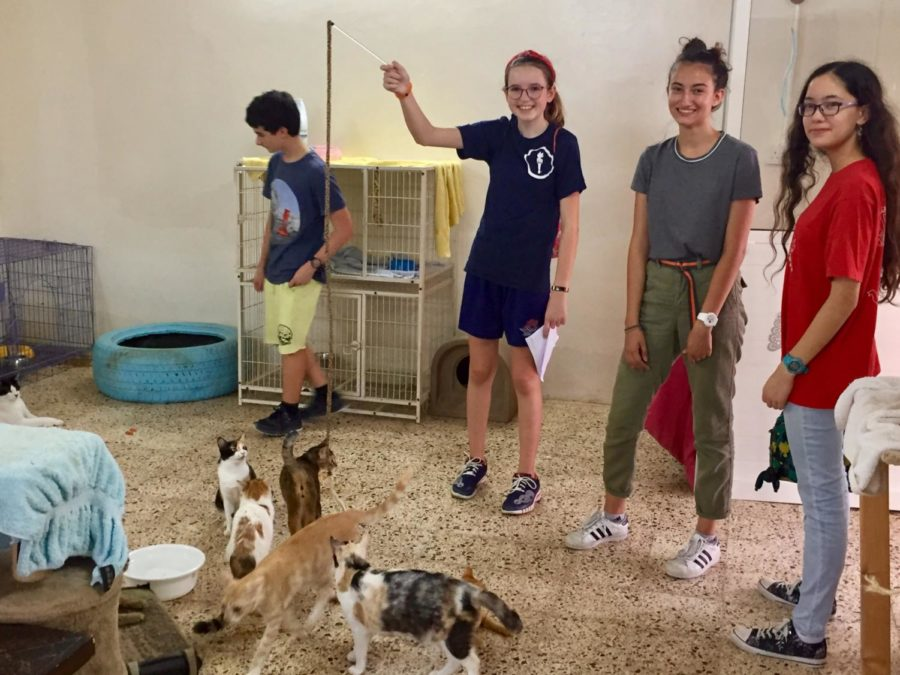 Volunteers played with the cats on a service trip to the PAWS animal shelter.