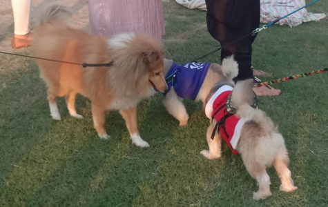 Woofstock celebrates tenth annual dog festival