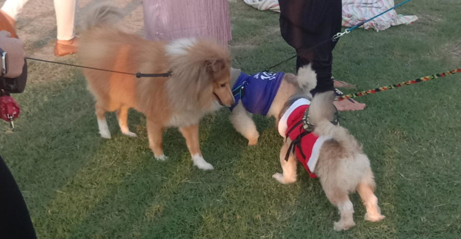Although adults had to pay a 20 QR entry fee to this year's QAWS Woofstock, children and